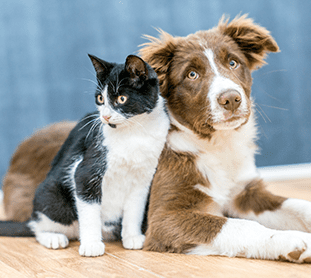 Cat and Dog Vaccinations in Plano: Dog and Cat Sitting Together